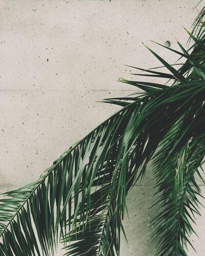 Tropical Concrete